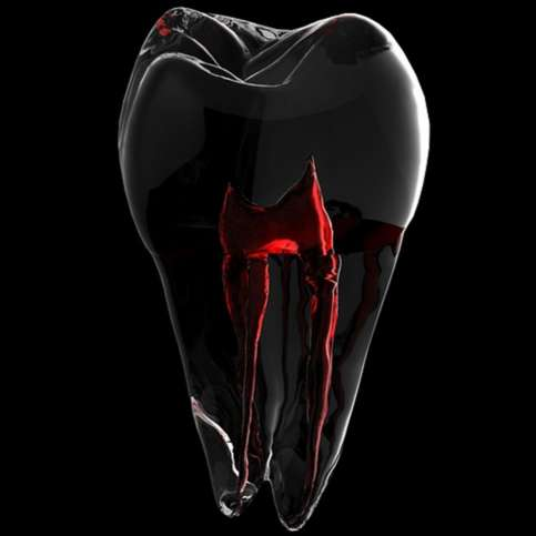 Get to Know Your Teeth – Dental Anatomy 101